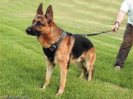 صور كلاب روعة 2017 , صور كلاب مفترسة 2018 , كلاب بوليسي 2017 2015_1390881950_127.