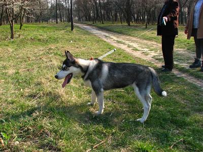 صور كلاب روعة 2017 , صور كلاب مفترسة 2018 , كلاب بوليسي 2017 2015_1390881950_319.