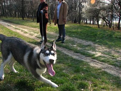 صور كلاب روعة 2017 , صور كلاب مفترسة 2018 , كلاب بوليسي 2017 2015_1390881950_495.