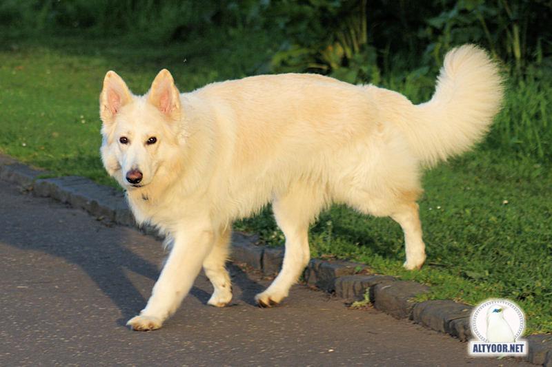 صور كلاب روعة 2017 , صور كلاب مفترسة 2018 , كلاب بوليسي 2017 2015_1390881964_208.