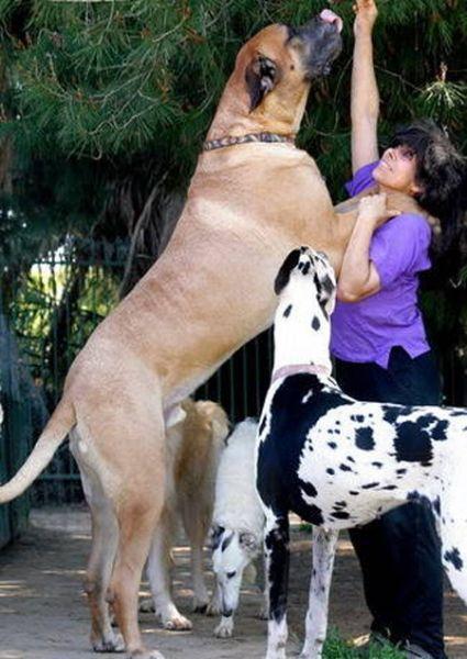 صور كلاب روعة 2017 , صور كلاب مفترسة 2018 , كلاب بوليسي 2017 2015_1390881973_520.
