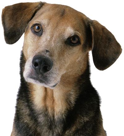 صور كلاب روعة 2017 , صور كلاب مفترسة 2018 , كلاب بوليسي 2017 2015_1390881986_980.