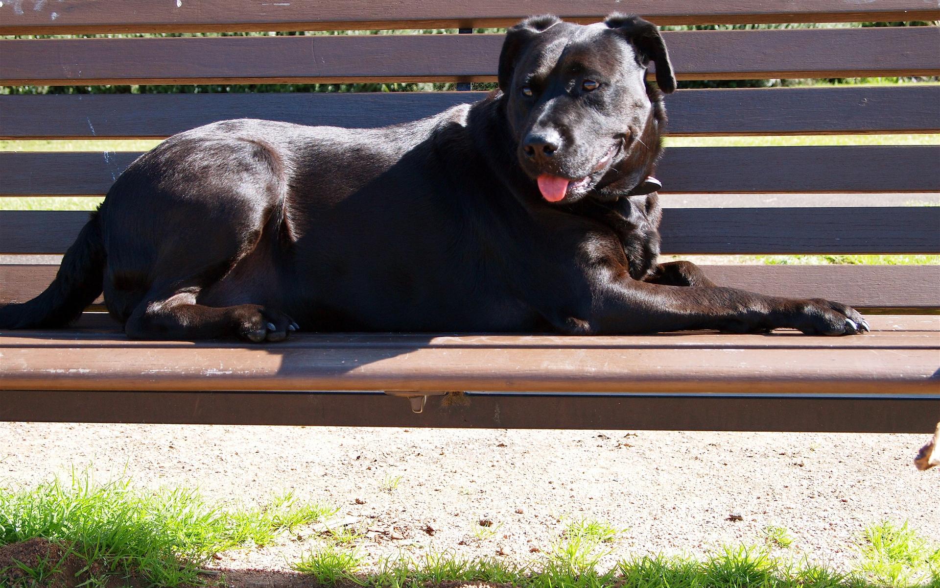 صور كلاب روعة 2017 , صور كلاب مفترسة 2018 , كلاب بوليسي 2017 2015_1390881989_823.
