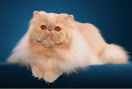 ������ ���� ����� ����� �� ������ ������� ������� �������� ���� Photos and information about cats 2015_1399502807_498.