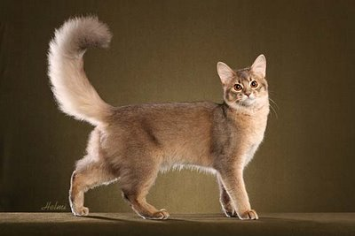 ������ ���� ����� ����� �� ������ ������� ������� �������� ���� Photos and information about cats 2015_1399503417_476.