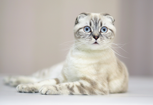 ������ ���� ����� ����� �� ������ ������� ������� �������� ���� Photos and information about cats 2015_1399503980_453.
