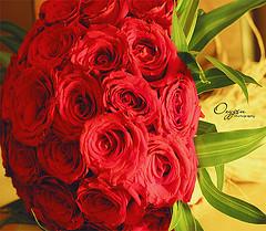 ��� ��� ���� ����� 2016 , ���� ������ ��� ������� ���� ���� ������ ���� Rosa damascena 2015_1402010259_593.
