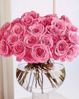 ��� ��� ���� ����� 2016 , ���� ������ ��� ������� ���� ���� ������ ���� Rosa damascena 2015_1402010259_781.