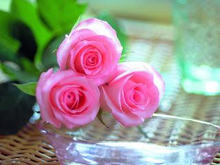 صور ورد جوري جديدة 2016 , اجمل الورود بكل الالوان احمر اصفر بنفسجي ابيض