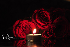 ��� ��� ���� ����� 2016 , ���� ������ ��� ������� ���� ���� ������ ���� Rosa damascena 2015_1402010260_750.