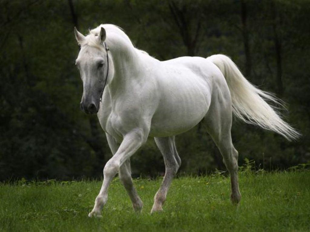 ��� ���� ����� ������ ���� , ���� ���� ���� ���� , ����� ���� ������ 2016 , Photos horses 2015_1412121750_692.