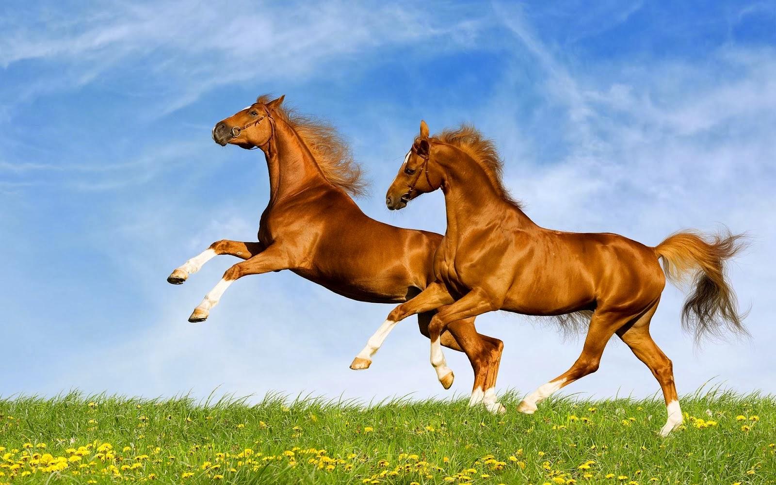 ��� ���� ����� ������ ���� , ���� ���� ���� ���� , ����� ���� ������ 2016 , Photos horses 2015_1412121753_467.