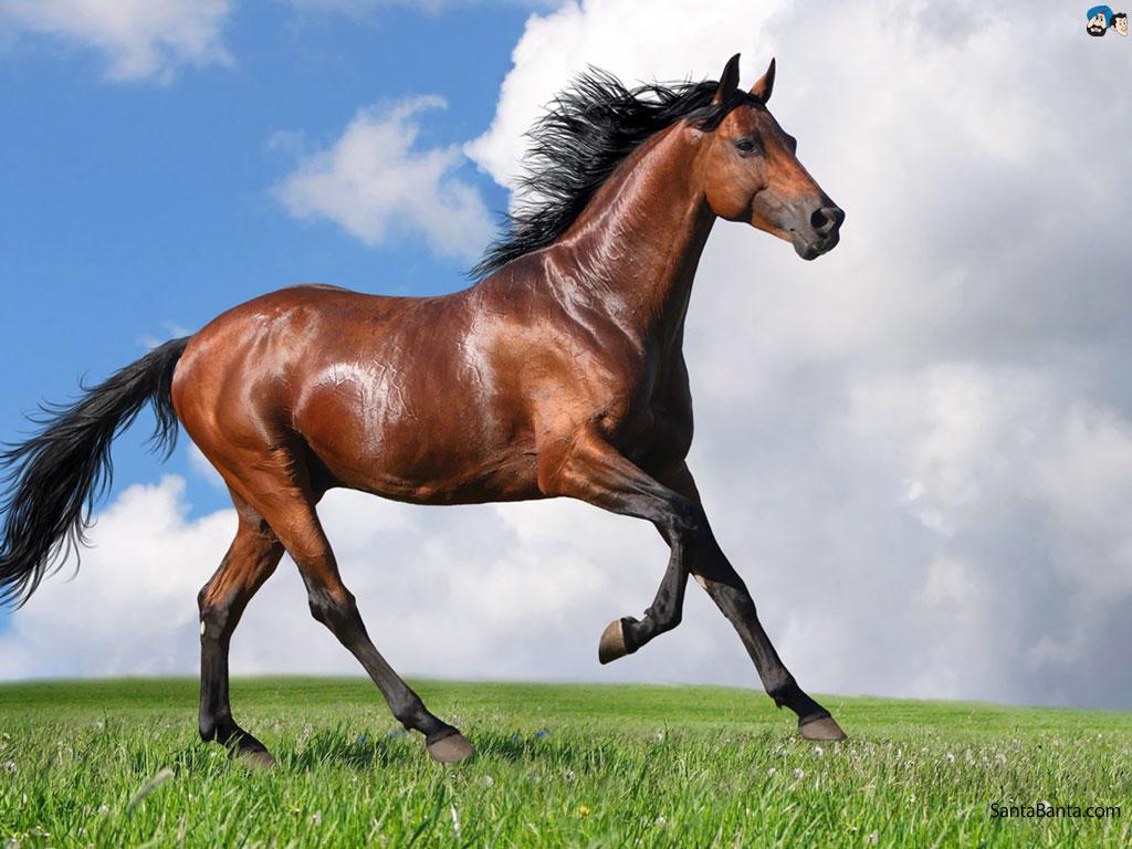 ��� ���� ����� ������ ���� , ���� ���� ���� ���� , ����� ���� ������ 2016 , Photos horses 2015_1412121753_619.