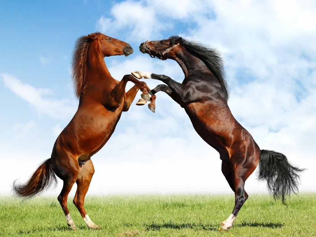 ��� ���� ����� ������ ���� , ���� ���� ���� ���� , ����� ���� ������ 2016 , Photos horses 2015_1412121759_232.