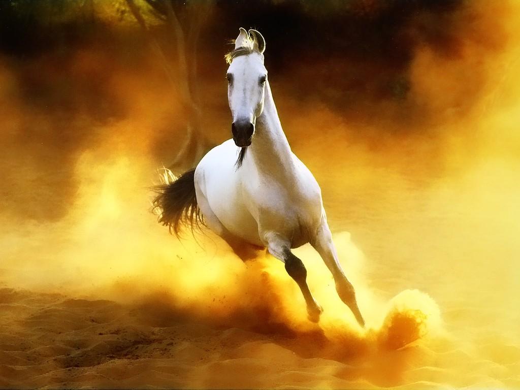 ��� ���� ����� ������ ���� , ���� ���� ���� ���� , ����� ���� ������ 2016 , Photos horses 2015_1412121762_284.