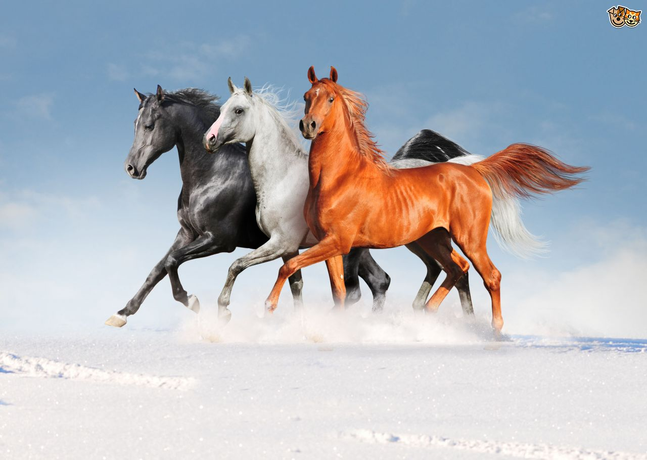 ��� ���� ����� ������ ���� , ���� ���� ���� ���� , ����� ���� ������ 2016 , Photos horses 2015_1412121767_172.