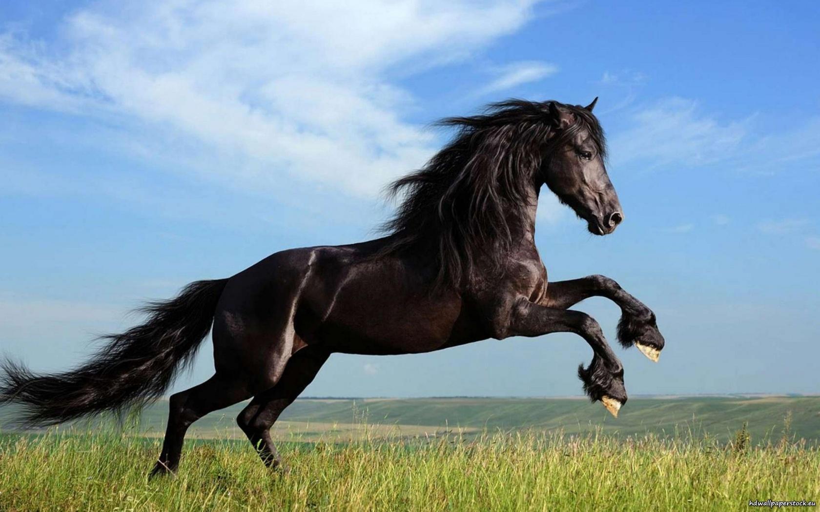 ��� ���� ����� ������ ���� , ���� ���� ���� ���� , ����� ���� ������ 2016 , Photos horses 2015_1412121767_278.