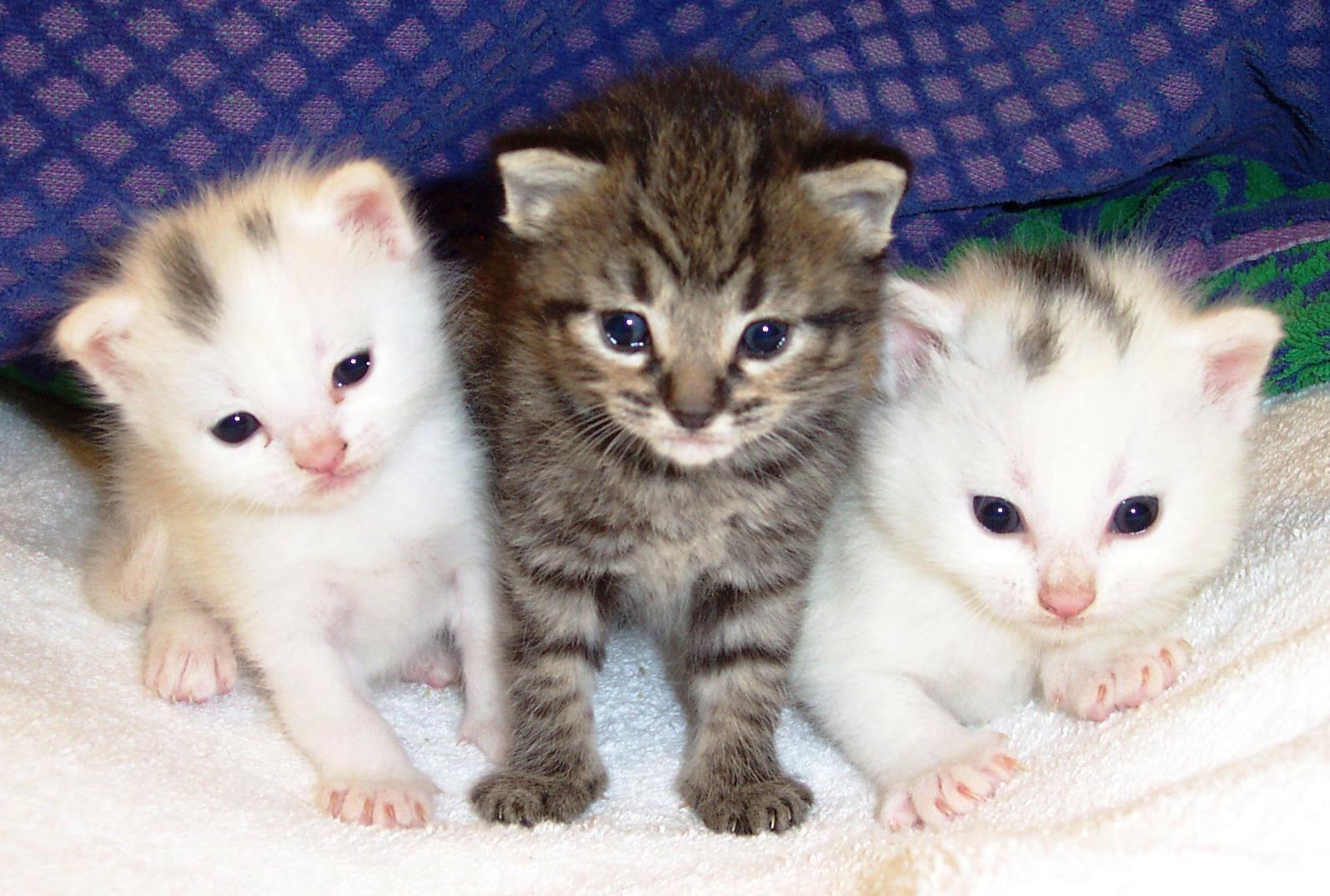 ��� ��� ����  , ��� ��� ����� 2016 , ��� ����� 2016 Photos Cats 2015_1412123023_843.