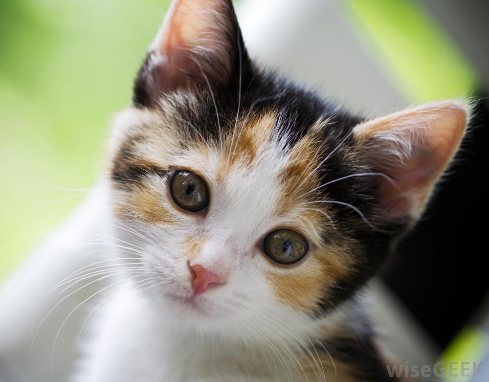 ��� ��� ����  , ��� ��� ����� 2016 , ��� ����� 2016 Photos Cats 2015_1412123027_616.