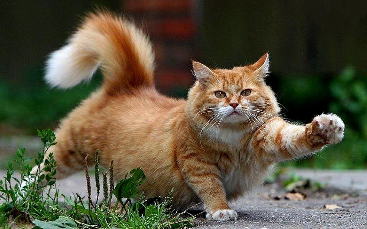 ��� ��� ����  , ��� ��� ����� 2016 , ��� ����� 2016 Photos Cats 2015_1412123030_516.