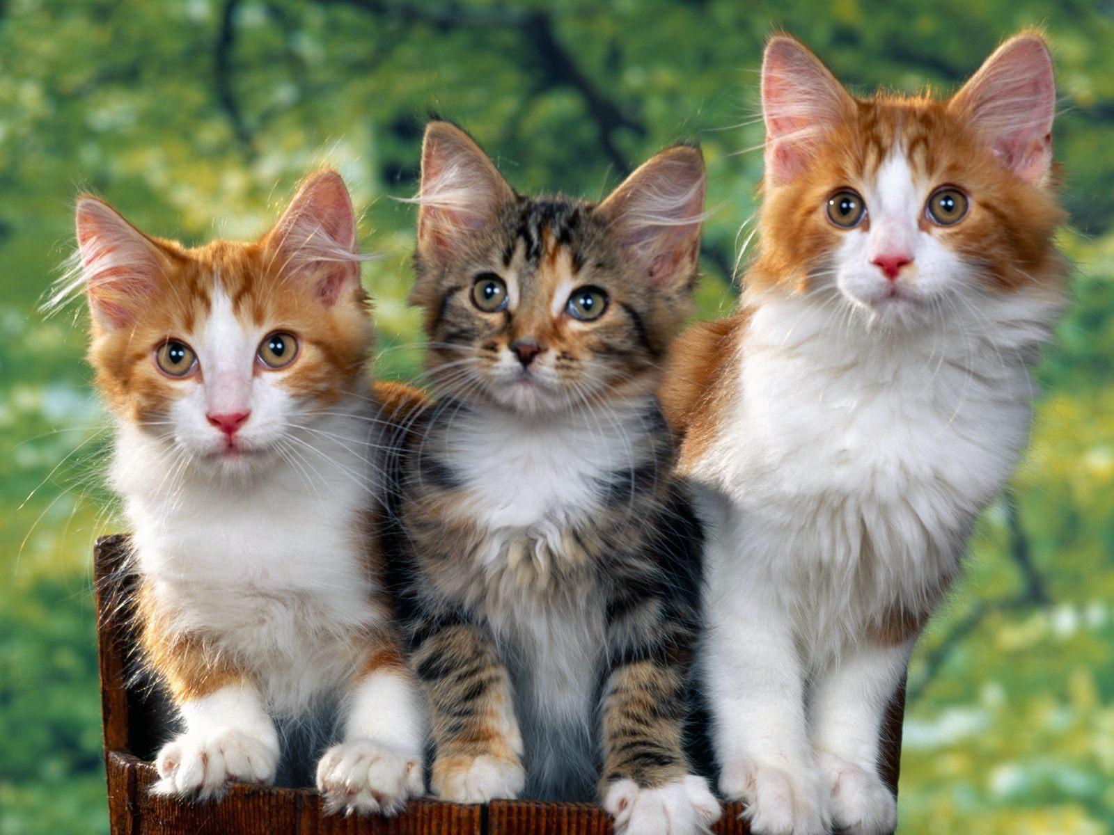 ��� ��� ����  , ��� ��� ����� 2016 , ��� ����� 2016 Photos Cats 2015_1412123033_254.
