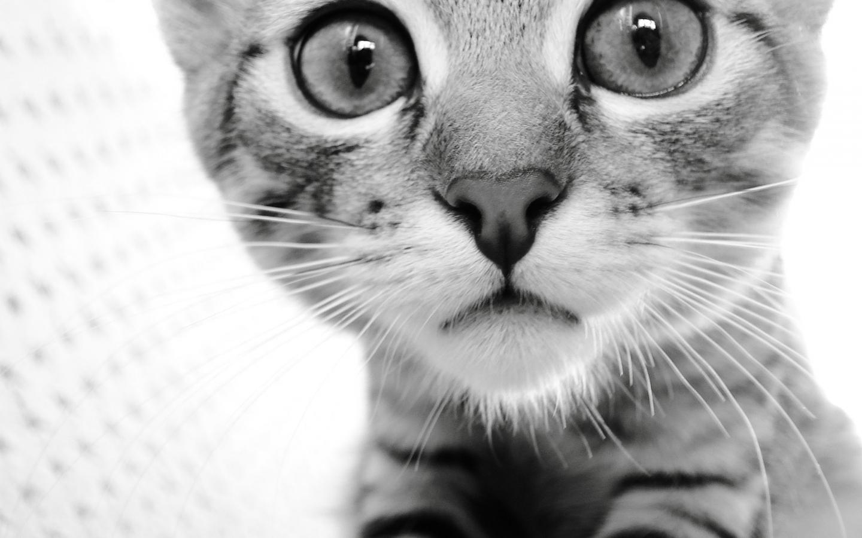 ��� ��� ����  , ��� ��� ����� 2016 , ��� ����� 2016 Photos Cats 2015_1412123042_896.