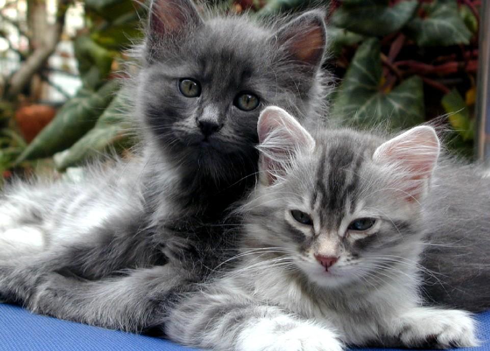 ��� ��� ����  , ��� ��� ����� 2016 , ��� ����� 2016 Photos Cats 2015_1412123043_699.