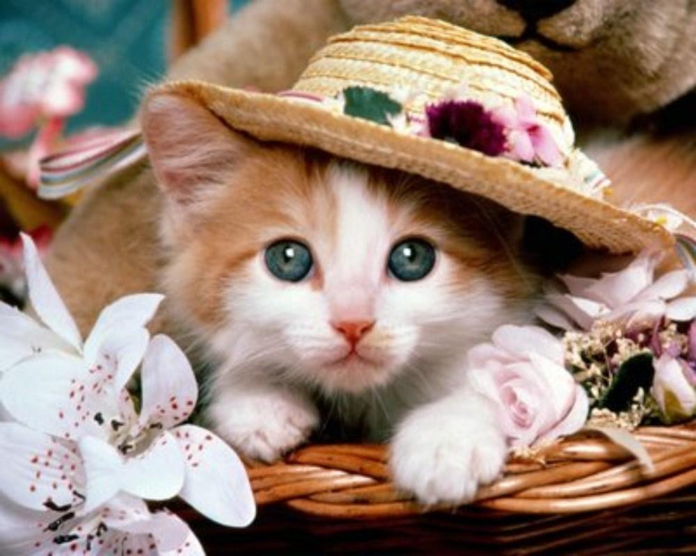 ��� ��� ����  , ��� ��� ����� 2016 , ��� ����� 2016 Photos Cats 2015_1412123047_285.