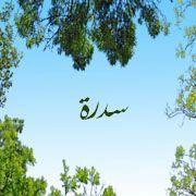 صور اسم سدرة عربي و انجليزي مزخرف , معنى اسم سدرة وشعر وغلاف ورمزيات 2016