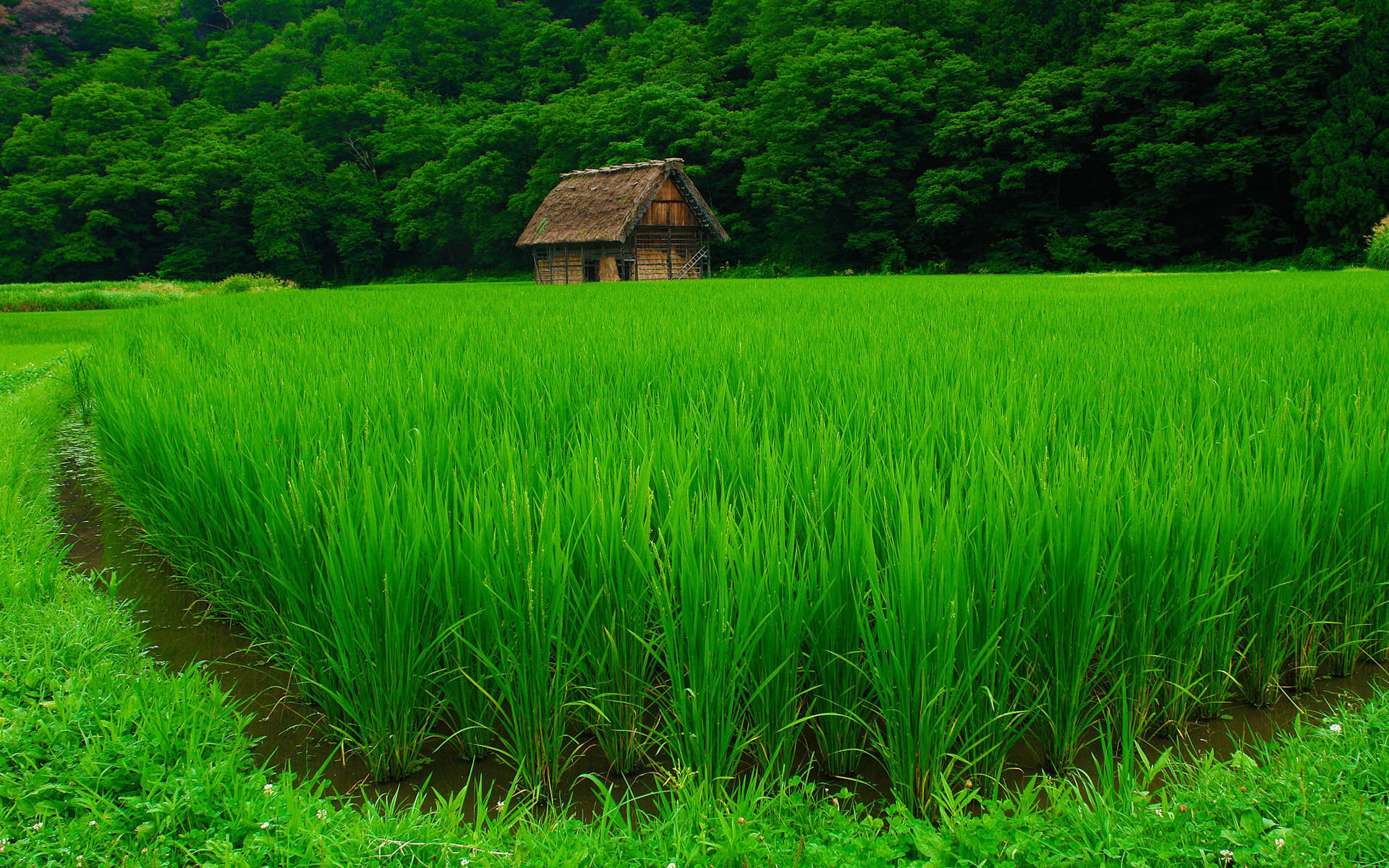خضراء تفتح النفس خلفيات طبيعة