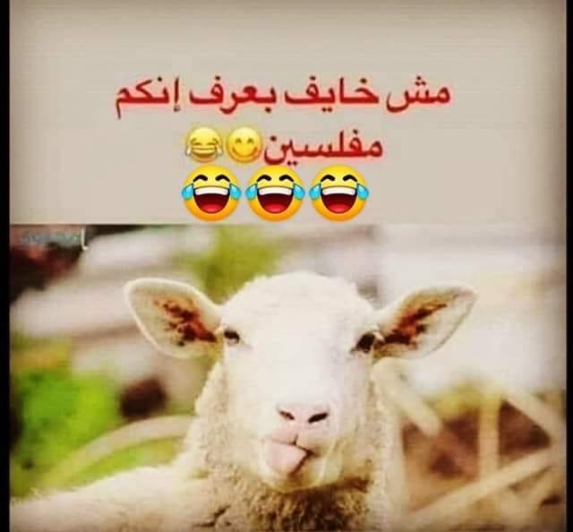مش خايف بعرف إنكم مفلسین