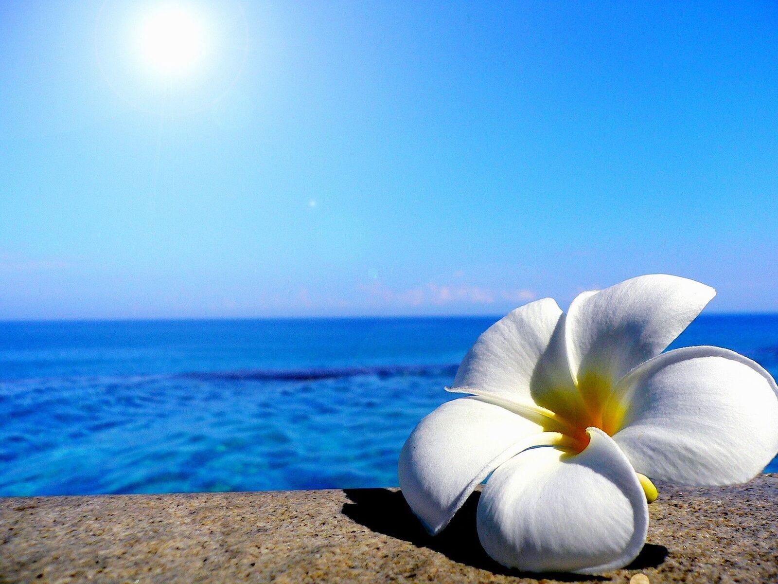 خلفيات زهور الشاطئ 2021 اجمل الزهور على الشاطئ Beach Flowers Wallpaper 4k Hd صقور الإبدآع