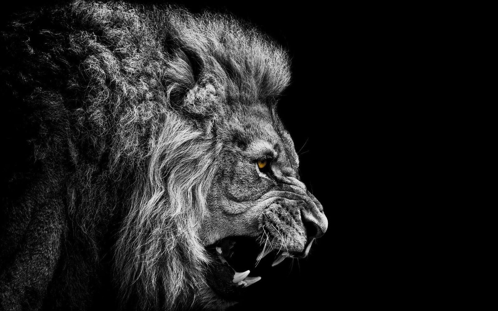 صور الاسد مميزة خلفيات الاسود للفوتوشوب 2021 Epic Lion Wallpapers صقور الإبدآع