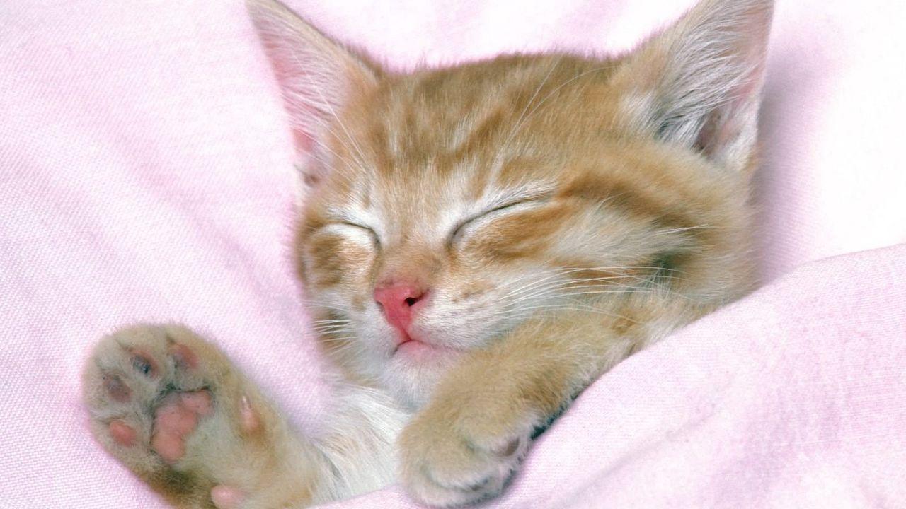 kitten_sleeping_baby_striped_89331_1280x720.jpg