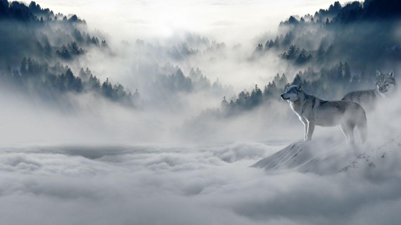 olves_predators_fog_snow_mountains_116660_1280x720.jpg