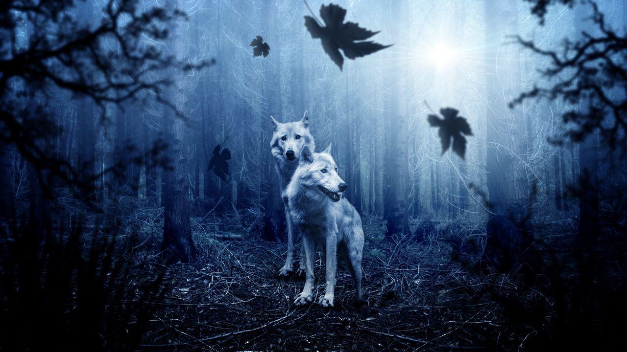 wolves_predators_forest_photoshop_118299_1280x720.jpg