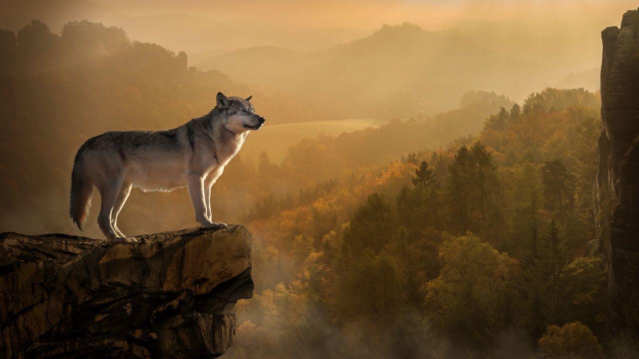 wolf_rock_precipice_predator_120088_1280x720.jpg