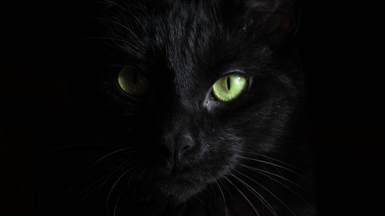 black_cat_muzzle_look_117261_1280x720.jpg