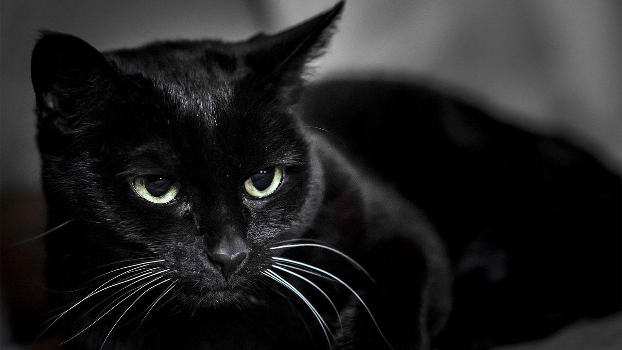 black_cat_muzzle_eyes_106808_1280x720.jpg