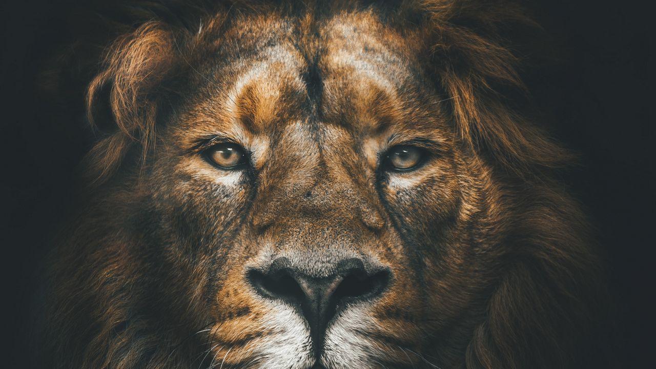 lion_muzzle_mane_120524_1280x720.jpg