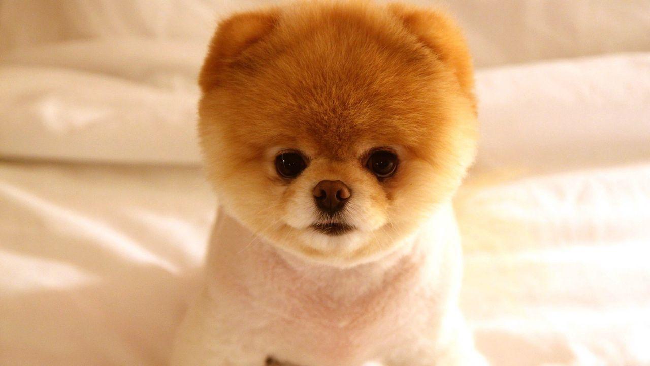 puppy_muzzle_cute_fluffy_66456_1280x720.jpg