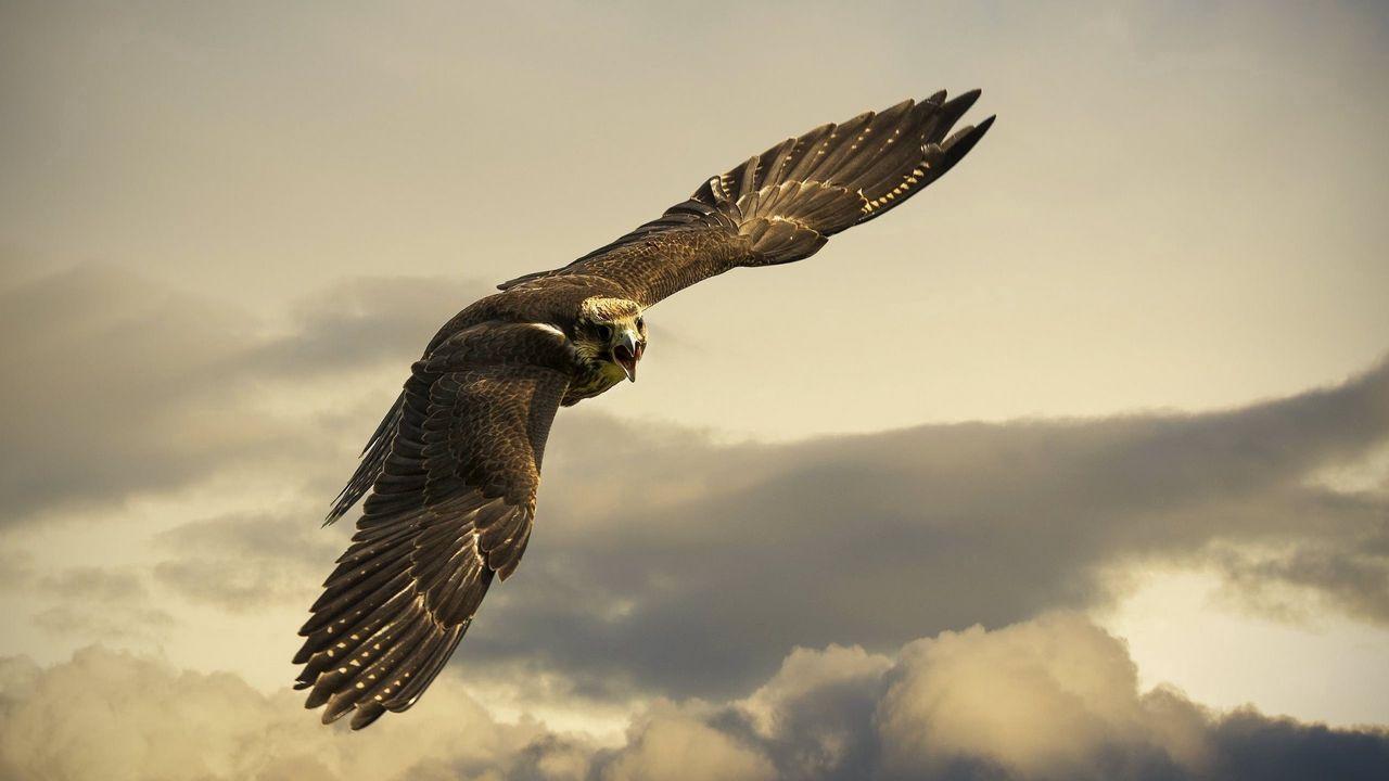 eagle_flight_sky_wings_clouds_97499_1280x720.jpg
