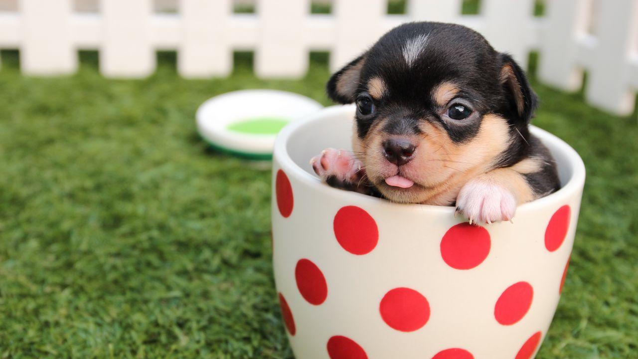 puppy_dog_cup_106508_1280x720.jpg