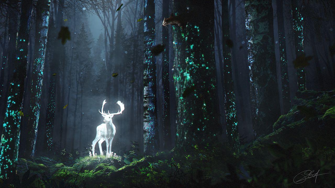 deer_forest_night_130294_1280x720.jpg