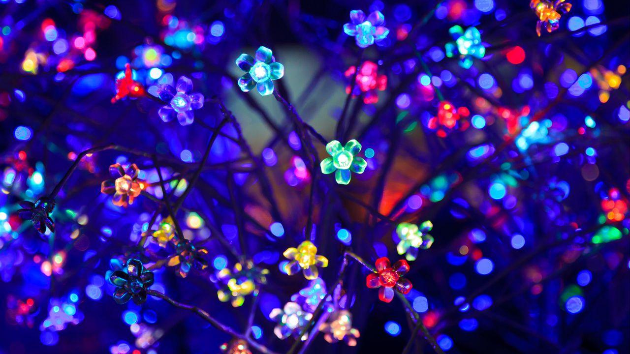 bulbs_flowers_neon_130264_1280x720.jpg