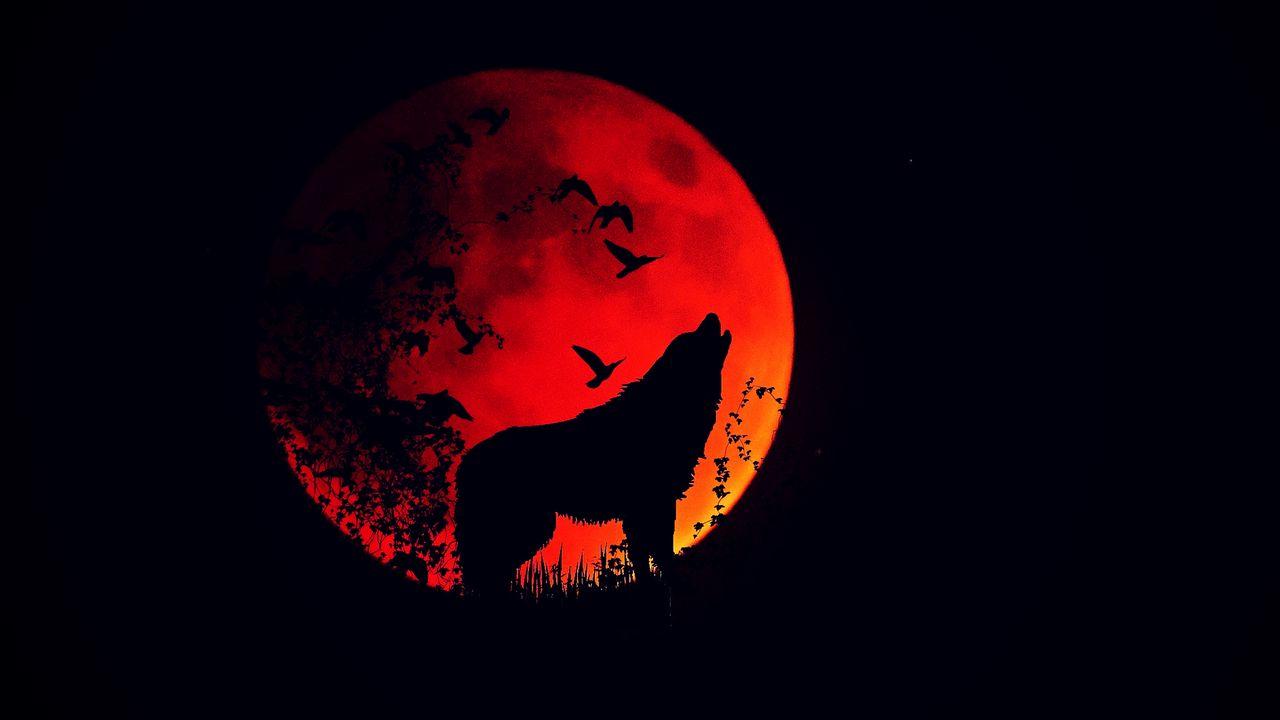 wolf_howl_silhouette_128733_1280x720.jpg