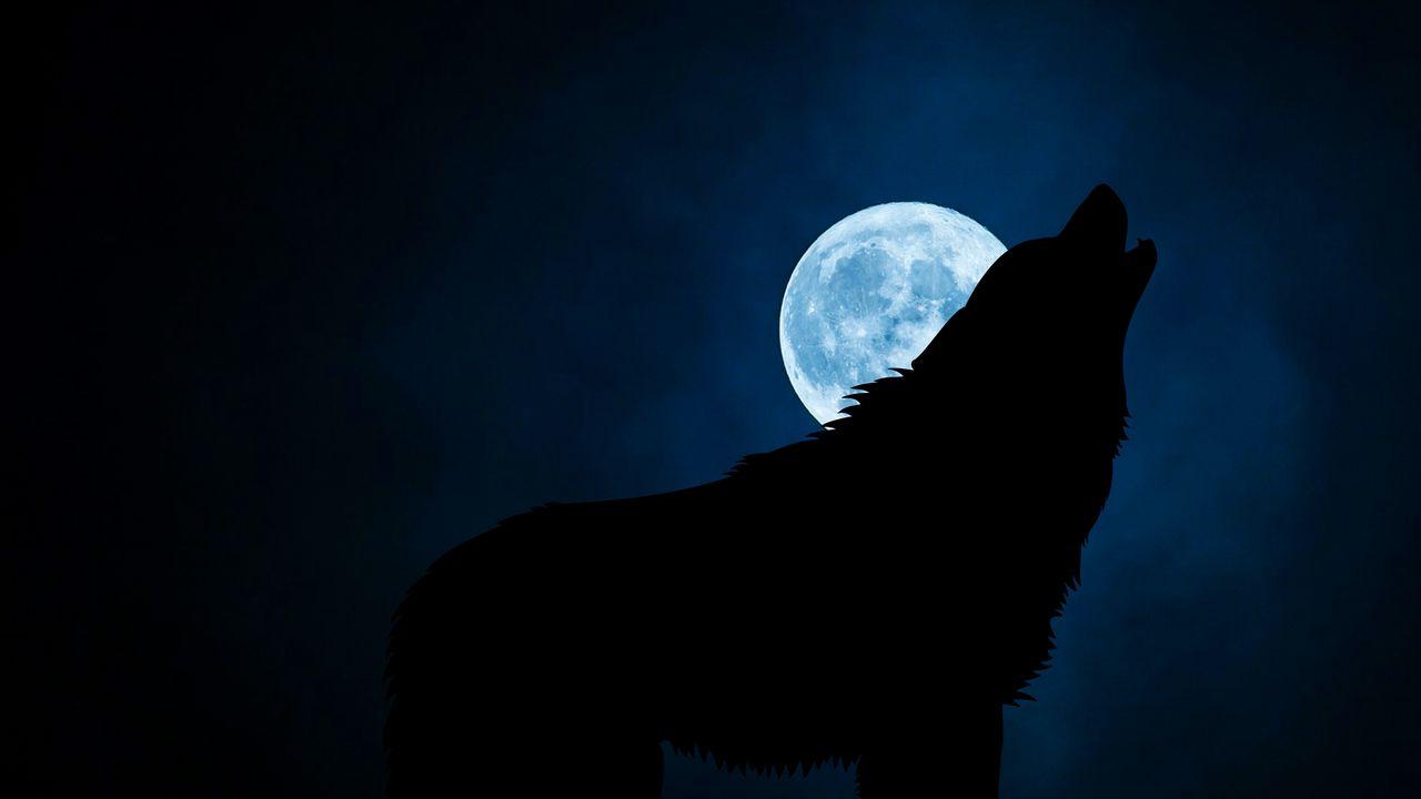wolf_silhouette_moon_night_118727_1280x720.jpg