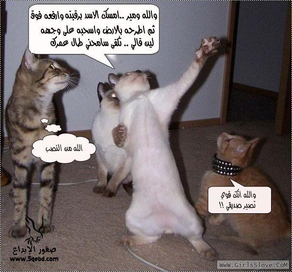 ���� ��� ������� ���� 2016 , ��� ������� ���� �� ����� , ��� ������� ����� , Animals - Jokes 2013_1372821448_931.