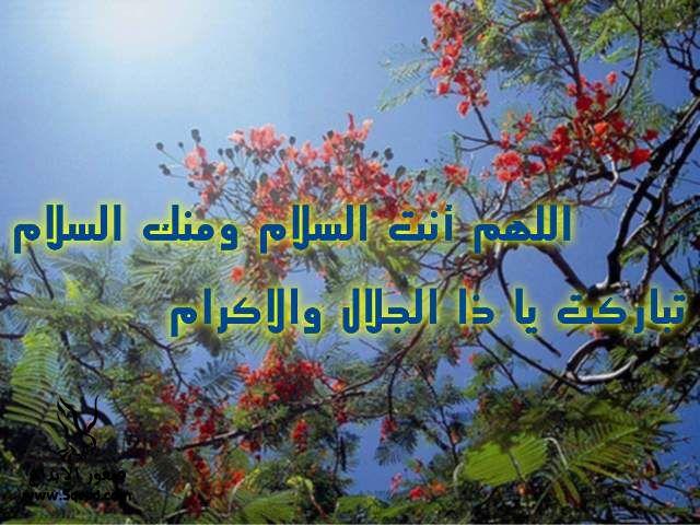 2013_1384549525_848.jpg