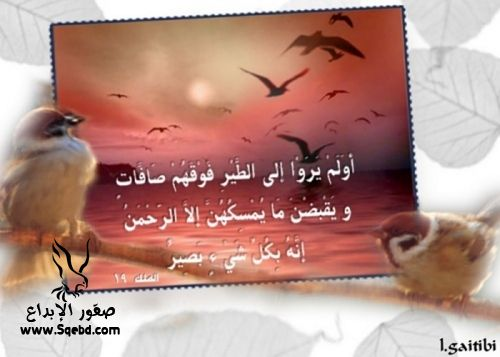 2013_1384551048_694.jpg